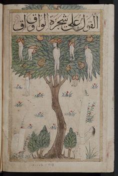 Wonders: the Waq-waq tree. Illustration of a tale. From a Arabic collectaneous manuscript known as Kitab al-bulhan. Medieval Manuscript, Medieval Art, Illuminated Manuscript, Tableaux Vivants, Oriental, Ancient Art, Illustrations, Tree Illustration, Islamic Art