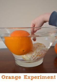 Orange science experiment for kids!