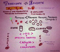 Medicowesome: Exudate & Transudate