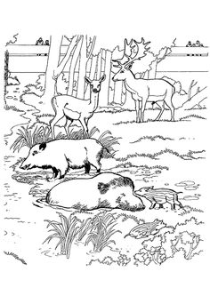 Cmplex Animal Colouring Pages Page