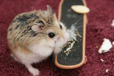 I like skateboards, but sunflower seeds are better.