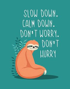 Cute Animal Quotes, Cute Quotes, Funny Quotes, Cute Sloth Pictures, Cute Baby Sloths, Baby Otters, Funny Prints, Doodles, Nursery Wall Art