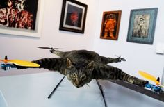 Dutch artist turns dead cat into catocopter.