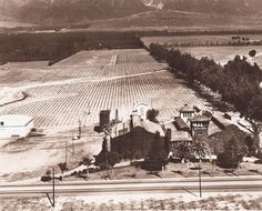 Virginia Dare Winery, Cucamonga, California 1910  Located at Foothill Blvd. (Route 66) and Haven Avenue, Rancho Cucamonga, CA.