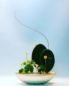 Trendy flowers vase arrangements ikebana Ideas – Famous Last Words Ikebana Flower Arrangement, Ikebana Arrangements, Beautiful Flower Arrangements, Flower Vases, Flower Art, Floral Arrangements, Cactus Flower, Exotic Flowers, Purple Flowers