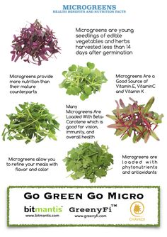 Health benefits and Nutrition facts about micro greens – Microgreens growing indoor Growing Microgreens, Growing Herbs, Growing Vegetables, Growing Sprouts, Indoor Grow Kits, Fitness Models, Sprout Recipes, Fruit And Veg, How To Stay Healthy
