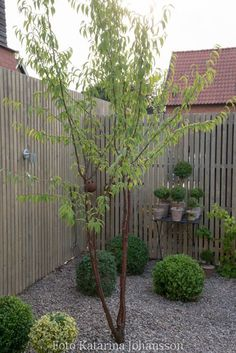 Järnvitriol Easy Garden, Home And Garden, Timber Fencing, Full Sun Perennials, Garden Living, Trees And Shrubs, Walled Garden, Green Plants, Garden Inspiration