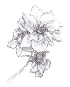 black and white drawing larkspur flower - Google Search
