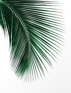 Another simple but beautiful print. Another simple but beautiful print. The post Another simple but beautiful print. appeared first on Fotowand ideen. Tree Wallpaper Iphone, Plant Wallpaper, Tropical Wallpaper, Wallpaper Spring, Palm Leaf Wallpaper, Wallpaper Ideas, Tropical Art, Tropical Leaves, Tropical Vibes