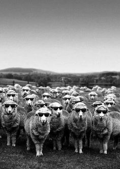 We are not sheep. We are not goats. We are not lambs. We certainly are not deer. My darling, we are...the Ovejas