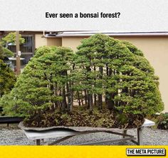 Bonsai Forest✖️FOSTERGINGER AT PINTEREST ✖️ 感謝 / 谢谢 / Teşekkürler / благодаря / BEDANKT / VIELEN DANK / GRACIAS / THANKS : TO MY 10,000 FOLLOWERS✖️