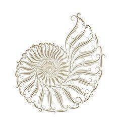 Sketch of seashells vector on VectorStock®