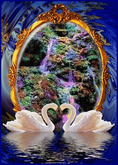 Glitter Graphics: the community for graphics enthusiasts! Gif Pictures, Nature Pictures, Pretty Pictures, Beautiful Swan, Beautiful Birds, Fantasy Kunst, Fantasy Art, Gif Bonito, Beau Gif