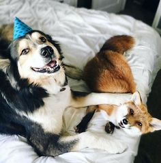 Meet Juniper and Moose, the Adorable Dynamic Duo