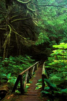 Wooden pathway, Boundary Trail, Mount Rainier National Park, Washington ✯ ωнιмѕу ѕαη∂у