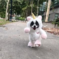 I never knew how much I needed a pom-icorn in my life 😉🦄🌈 Check out our friend Huxley the Panda Puppy wearing the costume he helped design!   Puppies breeds I never knew how much I needed a pom-icorn in my life 😉🦄🌈 Super Cute Puppies, Baby Animals Super Cute, Cute Baby Dogs, Cute Funny Dogs, Cute Dogs And Puppies, Cute Little Animals, Cute Funny Animals, Funny Pets, Funny Pet Memes