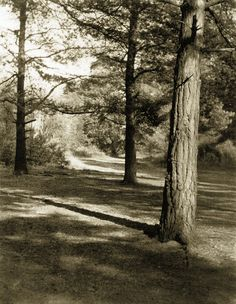 Frederick H. Evans - The Wood At Oxshott, 1909