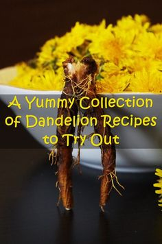 A Yummy Collection of Dandelion Recipes to Try Out *** See this great product.