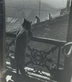 Réunion de chats, 1948 , Edouard Boubat. French (1923 - 1999)