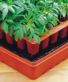 Seed Starting Basics - Gardening Tips and Advice from Burpee.com - Burpee.com