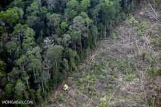 Beef, palm oil, soy, and wood products from 8 countries responsible for 1/3 of forest destruction!