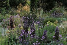 Lots and lots of verbena bonariensis, stipa gigantea, and some purple spire I simply do not know ... acanthus perhaps?