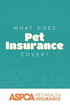 ASPCA Pet Health Insurance plans are customizable to best fit your pet's health needs and your budgetary needs. Coverage is available for accidents, illnesses, behavioral issues, and more. Return to your quote today to see your range of plan options. Health Insurance Plans, Pet Insurance, Health Care Coverage, Behavioral Issues, Be Yourself Quotes, Pet Care, Rv, Dog Cat, Range