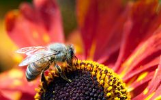 A new study published in the American Chemical Society's journal of Environmental Science and Technology creates a stronger link to what many scientists have already expressed concern over; the relationship between insecticides and mass die offs of honey bees.