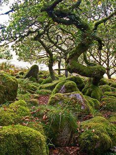 Wistman's Wood, Devon, England.