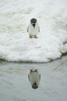 İnsanın penguen görünce ağlayası gelir mi ?.....