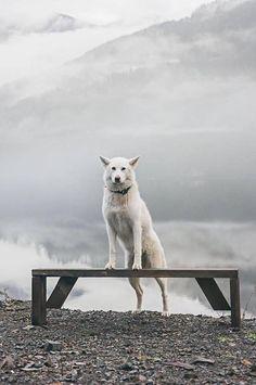 Photographer Troy Moth adopted Nikita, a Husky rescue, several years ago. Husky Rescue, A Husky, Husky Breeds, Amazing Adventures, Outdoor Life, View Photos, Cute Dogs, Labrador Retriever, Pup