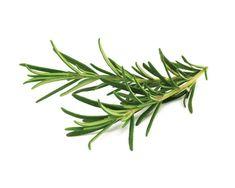 Toto je najlepšia zelená bylinka pre mozog, srdce, cievy, kĺby a mnohé ďalšie. Pripravíte si ju takto | Báječné Ženy Aromatic Herbs, Organic Herbs, Medicinal Herbs, Rosemary Plant, How To Dry Rosemary, Grow Rosemary, Overwintering, Smart Garden, Evergreen Shrubs