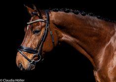Horses, Animals, Animales, Animaux, Horse, Words, Animal, Animais