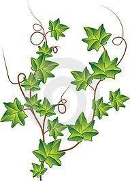 Ivy tat for rib?