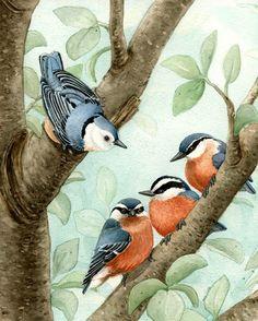 Bird Tree Nuthatch (Tracy Lizotte)