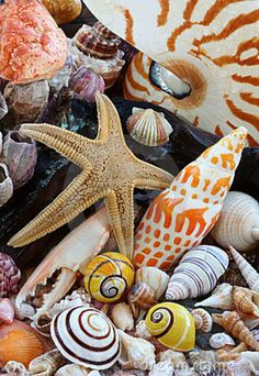 Plenty of treasures of the sea for everyone. I never think that I have enough, always room for one more!