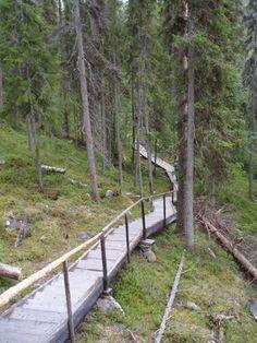 Photo by Pertti Tikkanen ... Kurouoma, Nature Reserve, Finland