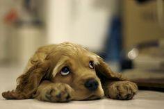 O câncer é a doença que mais mata cachorros. Infelizmente, não podemos impedir que a doença atinja nosso cão, mas é importante ficar atento aos…