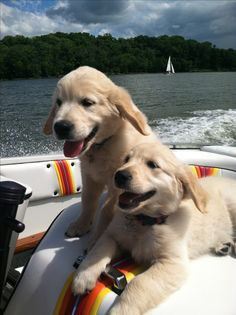 Boat puppies #budgettravel #travel #puppy #cute #dog #boat  www.budgettravel.com