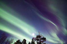 Einar Halvorsrud    Image taken:    Apr. 15, 2012    Location:    Alta, Norway