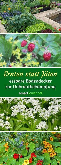 Garten Pflanzen Trockenen Regionen Tipps Sparen , 85 Best Garten Ideen Und Tipps Images On Pinterest