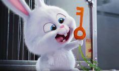 Snowball cute en fluffy