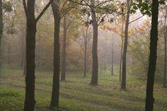 Il parco in autunno si riempie di nuovi colori