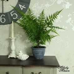 Artificial Green Bracken Fern Bush in Grey Pot Pretty green sprigs of realistic looking fern in a grey plant pot Brings the touch of the outdoors into your home Perfect for your kitchen window Great for making that focal point on any room