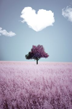 lovely small tree by Adrian Limani, via 500px