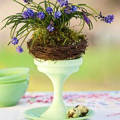 Despite their delicate appearance, grape hyacinths are tough enough to use in live arrangements. Enjoy their spring-fresh cheer for days, watering lightly every day to keep the roots moist, then plant them outdoors to bloom a/