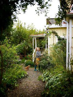 TRÄDGÅRDSMÄSTARENS OAS MITT I STAN: Linda Schilén är trädgårdsmästare på oasen Överjärva gård och det märks i hennes lilla mysiga hus i Sundbyberg strax norr om Stockholms tullar. Här lever hon ett grönskande lantliv både inne och ute | Cia Wedin / foto Patric Johansson - Lantliv
