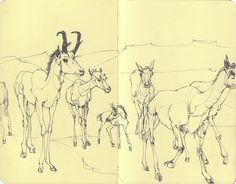 sketchbook by deannastaffo, via Flickr