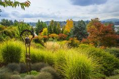 Ornamental grasses, low-growing shrubs, maples and conifers face the view toward Point Washington Narrows.