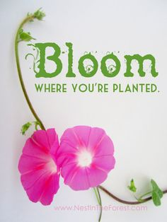 INSTANT CHRISTMAS PRESENT Bloom Where You're by NestInTheForest (Gifts under $10)